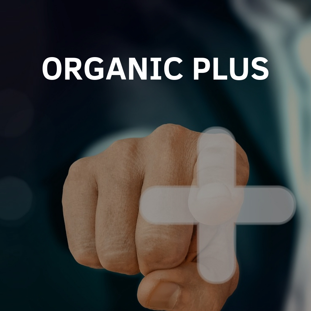 Organic SEO Services Plus Package By Digital Carnage